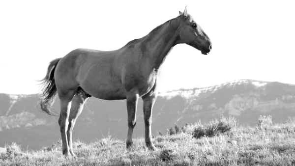Pferdehalter-Haftpflicht Tarif-Vergleich